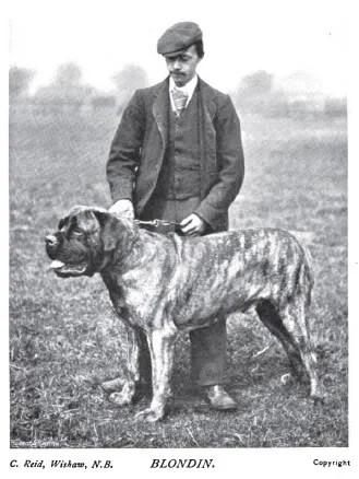 1899 Mastiff photo 1899_Mastiff_Blondin.jpg