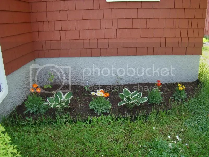 Front garden photo DSC08454.jpg