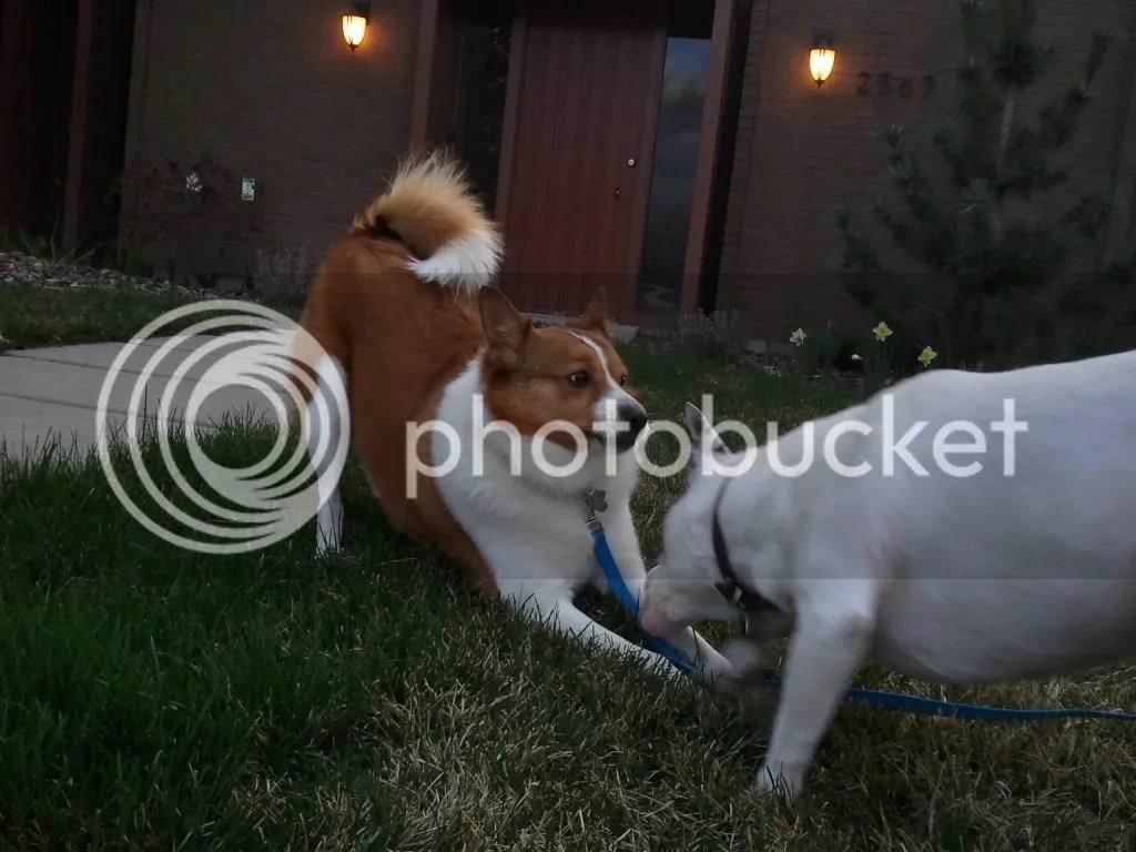 Atrus and Midna Playing
