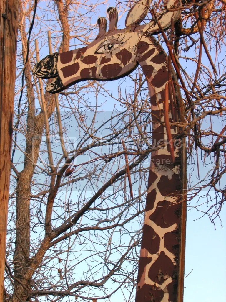 My Neighborhood Giraffe