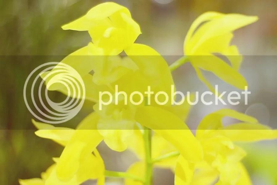 photo DSC_2326-1_zps23qb2lvy.jpg