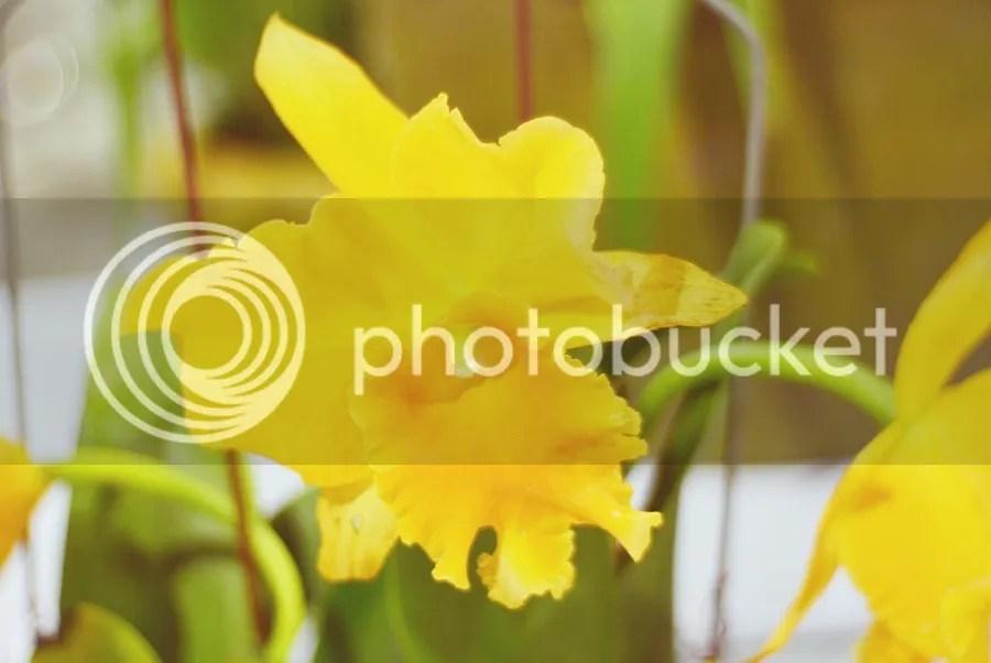 photo DSC_2327-1_zpskk3pth8l.jpg