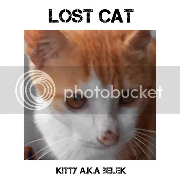 Lost Cat: Si Belek