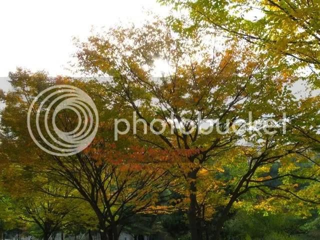 Fall in the Yard