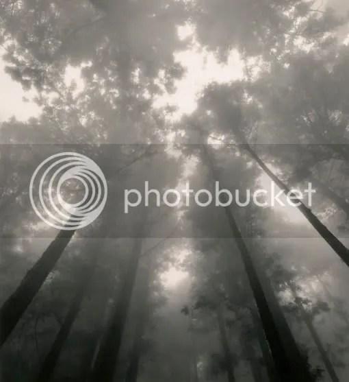 trees dreams