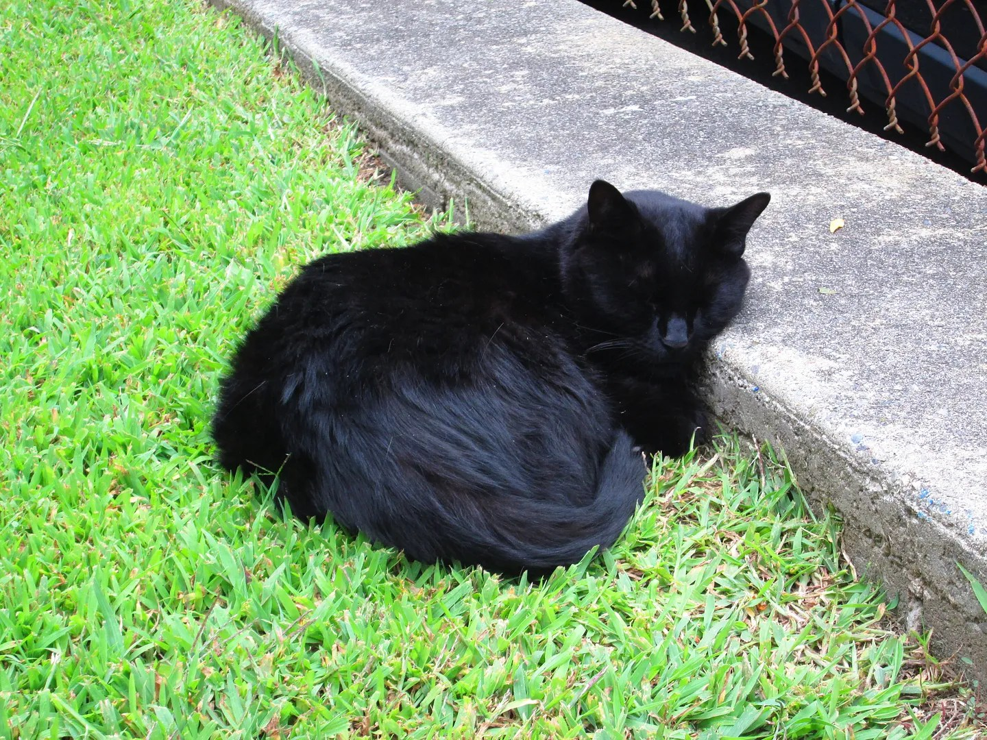 black cat sleeping curled up in a ball on the grass