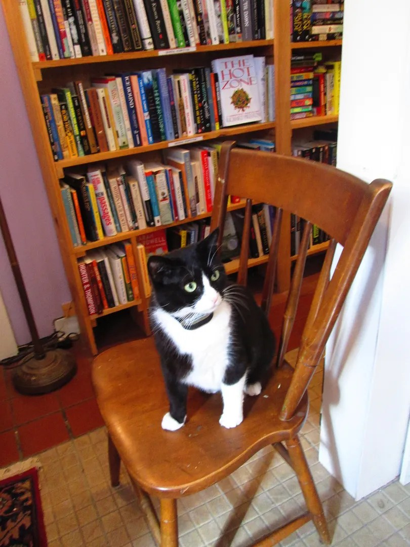 black and white cat sitting on chair in boswell's books bookstore
