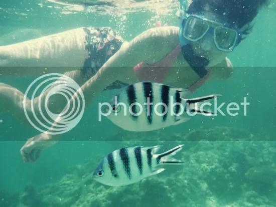 Snorkelling, Mana Island, Fiji