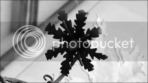 Fleur d'acier