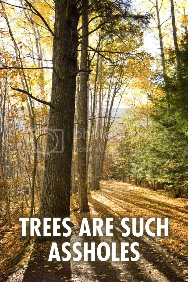 Trees are such assholes