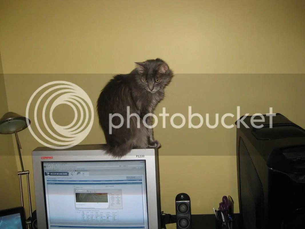 https://i2.wp.com/img.photobucket.com/albums/v637/bboyneko/stupid_cat3.jpg