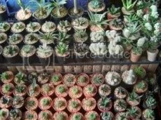 And Cactuses.