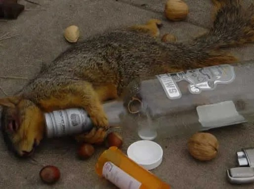 Dead squirrels, more emo then a bucket full of drunk writers.