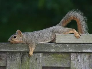Embracing the Squirrel (1/6)