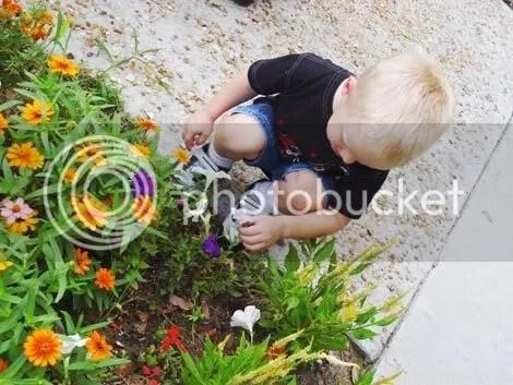 arthurflowers.jpg picture by faith_true