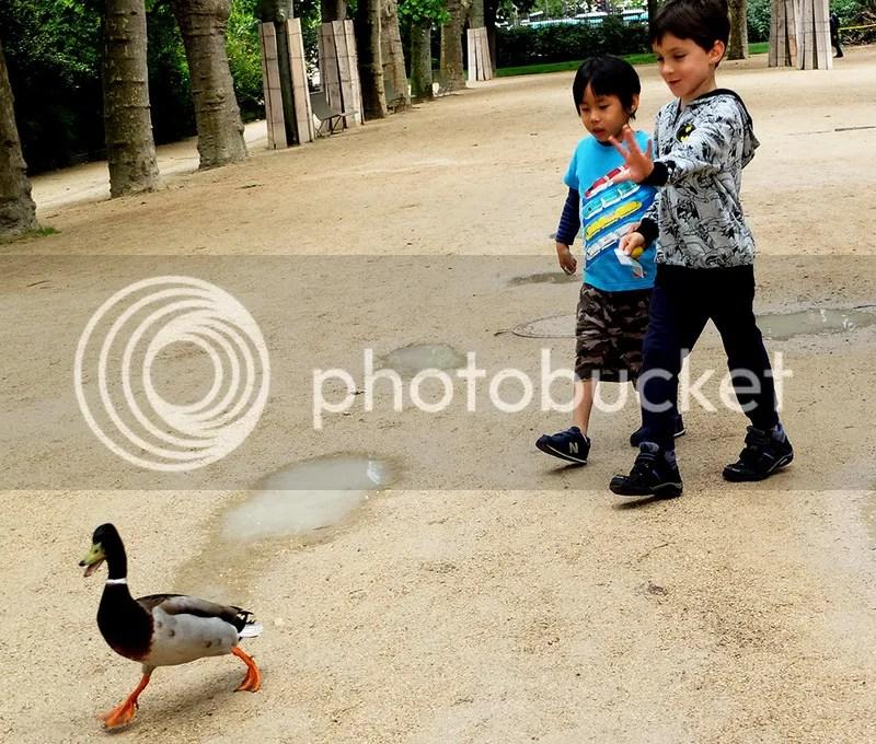 photo 24. animal.jpg