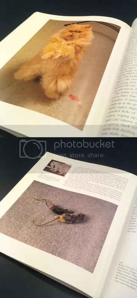 Creepy Cat Book