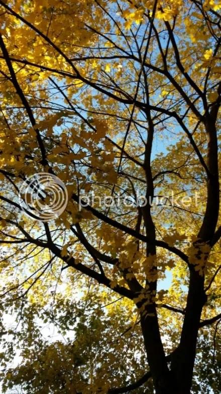 Fall Yellow