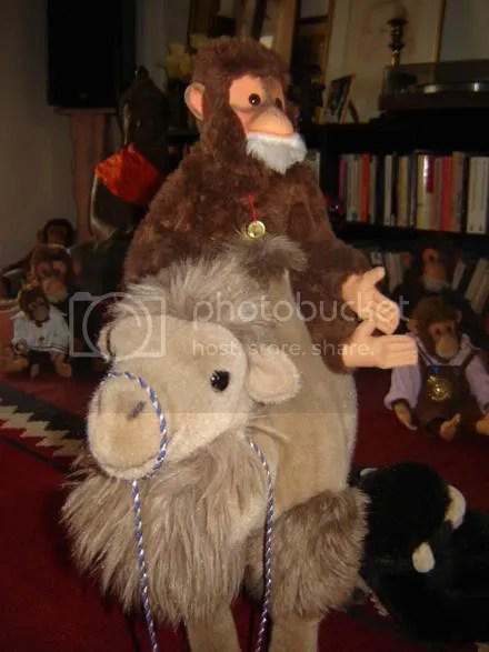 Monkey on Camel