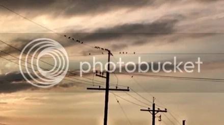 Sunset Powerlines