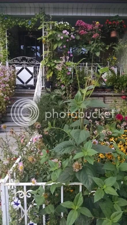 Neighbor's Garden