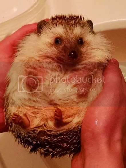 Emmett the Hedgehog