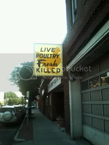 Live Poultry