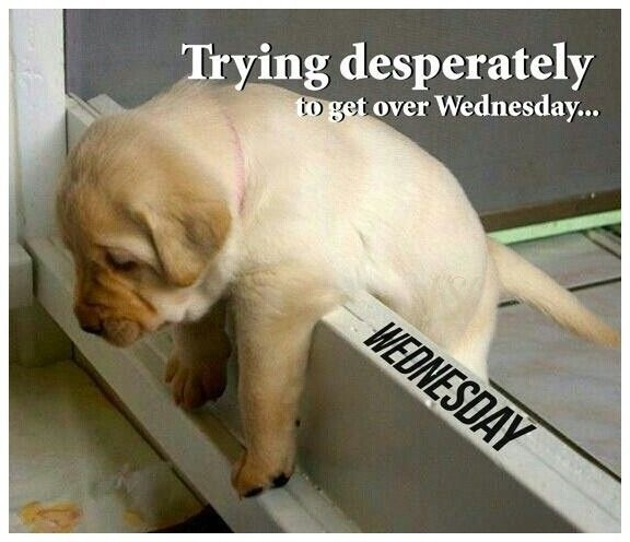 Day Quotes Hump Funny Wednesday