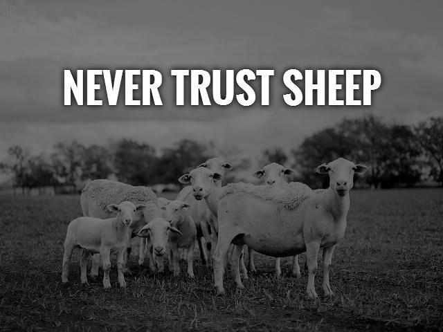Sheep Quotes | Sheep Sayings | Sheep Picture Quotes