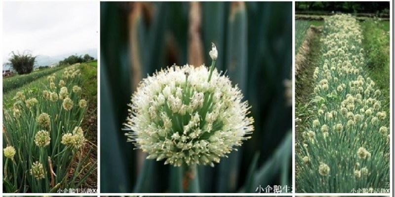 宜蘭‧景點 此蔥花非彼蔥花 美的像冒泡的三星蔥花海~~