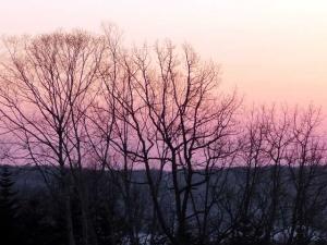 バラ色の空が背景の木々のシルエット