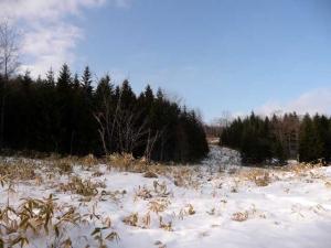 針葉樹(トドマツ)の黒い森