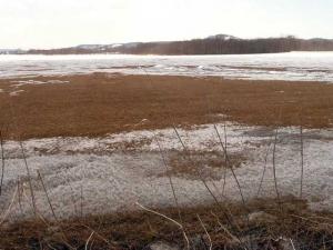 雪解けの牧草地