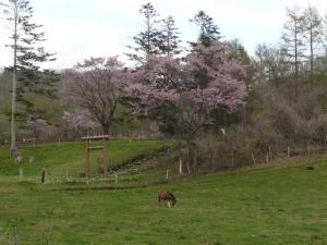 神社と馬とサクラ