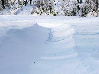 途中鹿の足跡があった