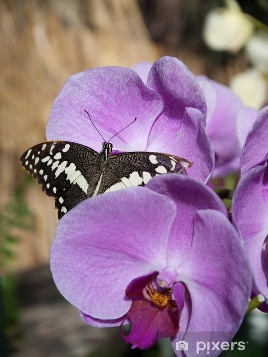 https pixers de fototapeten papillon noir et blanc sur une fleur violette 14307020