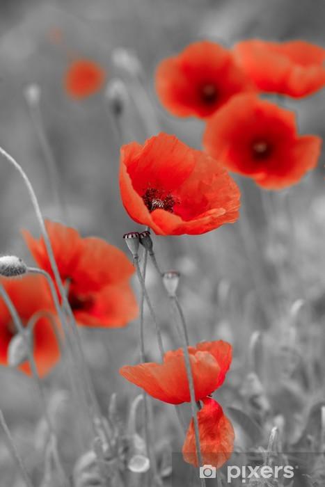 Rote Mohnblumen An Einem Sonnigen Tag Poster Online Bestellen