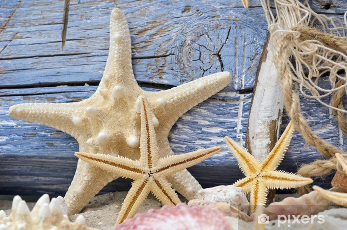 https pixers fr rideaux occultants etoiles de mer et bois flotte contre le mur en bois bleu 42978890