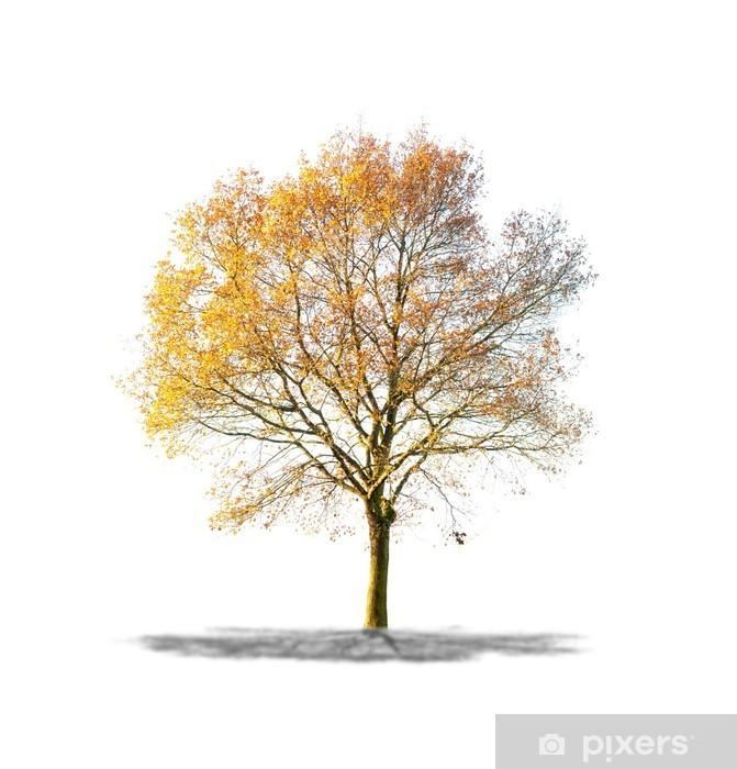 https pixers de fototapeten arbre sans feuilles sur fond blanc 47430903