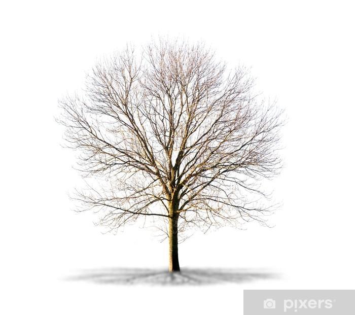 https pixers de poster arbre sans feuilles sur fond blanc 47430973