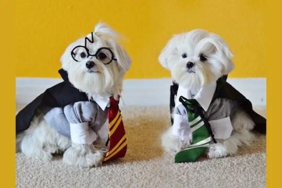 Image result for pet dress up