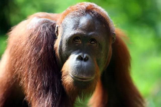 5 Animais em risco de extinção