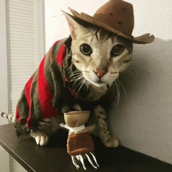 Image result for cats in cowboy hats