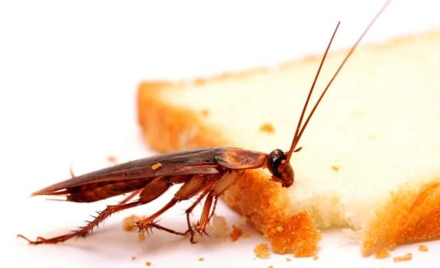 ¿Comer insectos? En Asia y México, la práctica de consumir insectos es frecuente. Además de ser saludables –por su contenido proteico-, se reproducen rápidamente, no son costosos y no dañan el planeta.