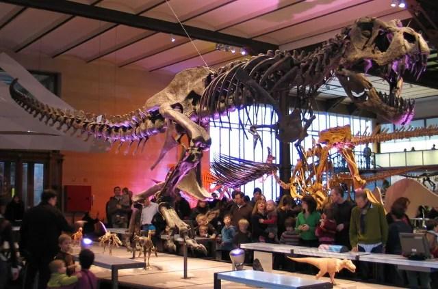 "Tyrannosaurus rex (réplica del espécimen BHI 3033, o ""Stan"") en el Real Instituto Belga de Ciencias Naturales en Bruselas, Bélgica.-"