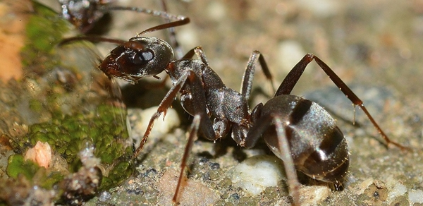 insects-566408_960_720