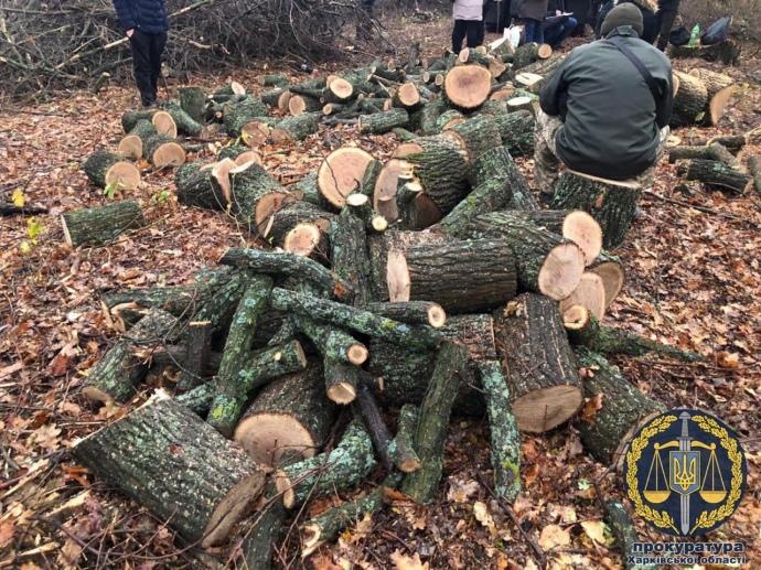 В Харківській області затримали банду лісорубів