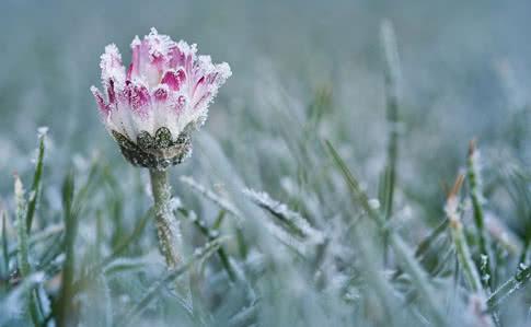 ДСНС попереджає про заморозки на Київщині у найближчу добу