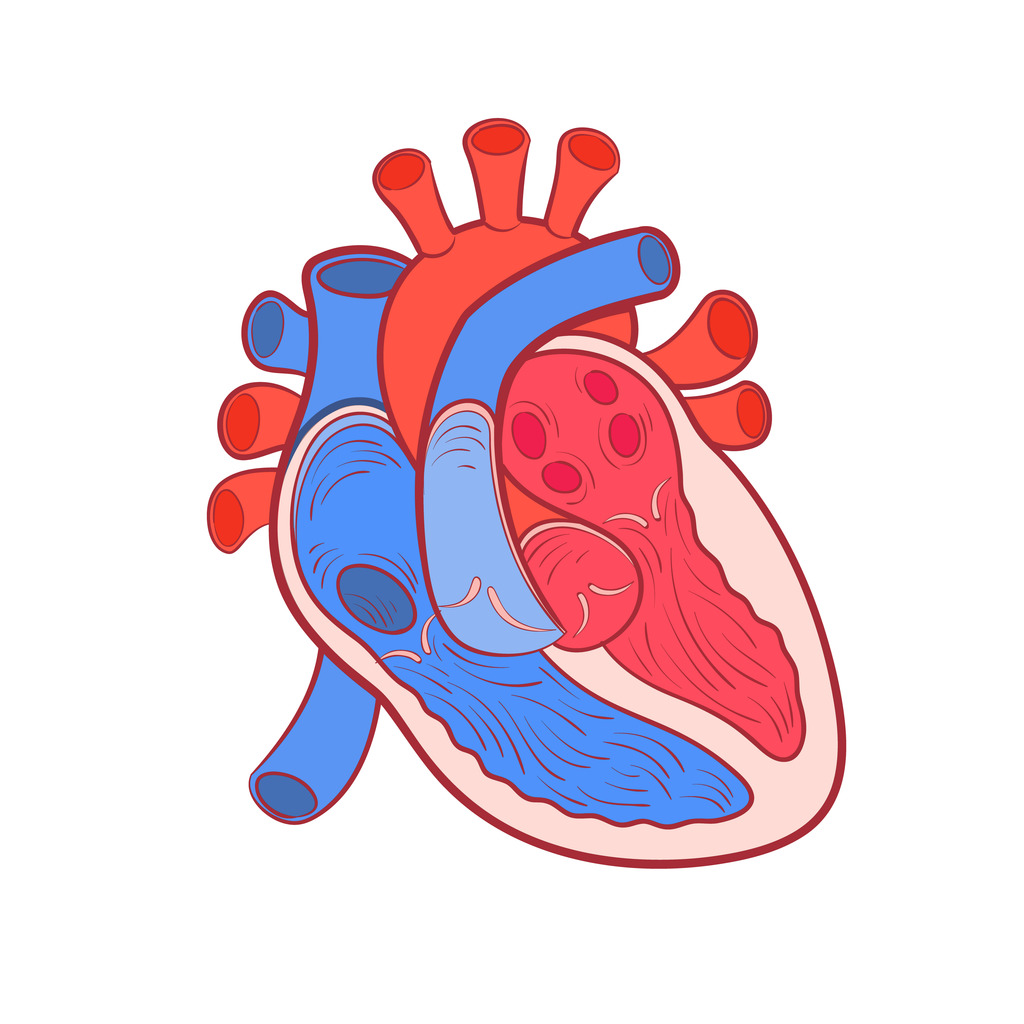 On Quizlet This Week Recognizing The First Heart