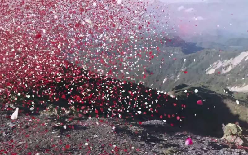 Pode até parecer cena de sonho, mas em 2013 uma cidade da Costa Rica, na América Central, foi coberta por 8 milhões de pétalas de flores